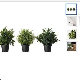 These are the three different types of plants that are $3.99 at Ikea you can not purchase them online either so you have to go to the nearest store to purchase.